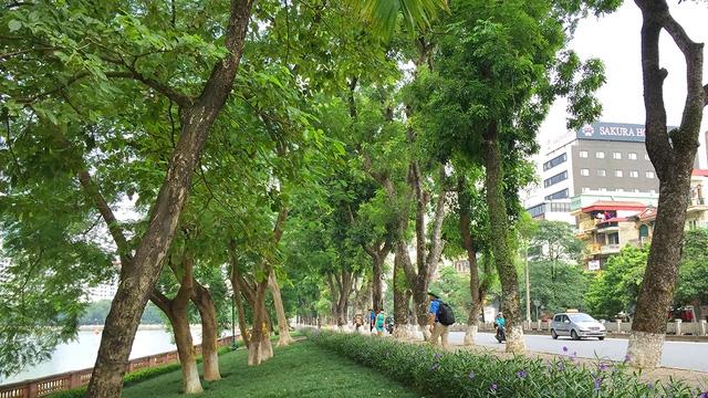 Đoạn đường tiền hành xử ý cây xanh từ đền Voi Phục đến đối diện ngõ 575 phố Kim Mã.