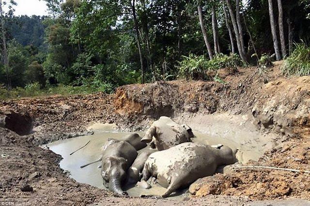 Tính nhầm độ sâu hố bùn, 7 voi lùn chết thảm - 1