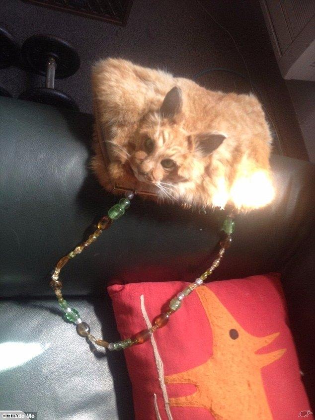 túi xách, túi xách làm từ mèo nguyên con, thú nhồi bông,đấu giá xe công