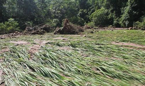 Nghệ An thiệt hại nặng do mưa lũ, 6 người chết và mất tích - ảnh 1