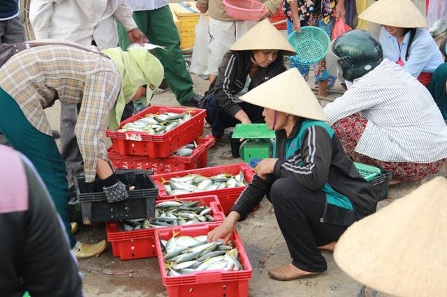 Nhóm hải sản sống ở tầng đáy trong phạm vi 13,5 hải lý trở vào bờ tại vùng biển 4 tỉnh miền Trung được xác định chưa an toàn (Ảnh minh họa: Đăng Đức).