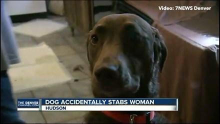 Kẻ tấn công bà Celinda - cô chó Mia.