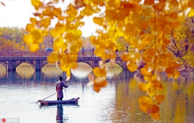 Mùa thu nhuộm sắc vàng ở Trung Quốc