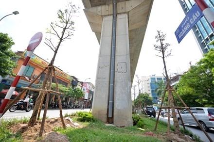 Những cây bàng Đài Loan mới được trồng trên phố Hoàng Cầu. Ảnh: VnExpress