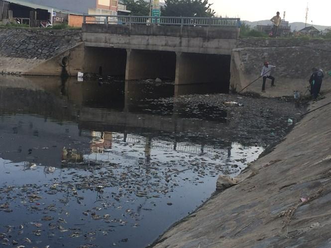 Công nhân Công ty thoát nước và xử lý nước thải đang vớt xác cá  /// Ảnh: Nguyễn Tú