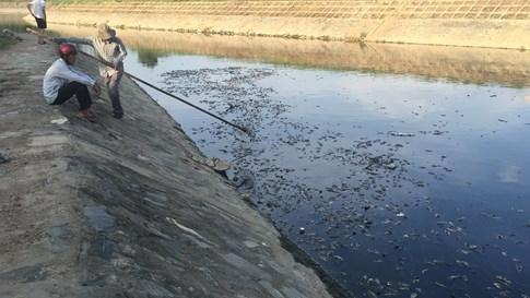 Cá chết dày đặc ở kênh Đa Cô, Đà Nẵng - ảnh 2