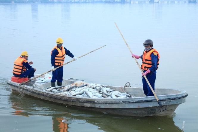 Cá chết trắng hồ Tây có thể do nước thiếu oxy?