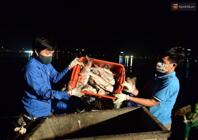 Hà Nội: Trắng đêm khắc phục hậu quả cá chết trắng ven hồ Tây - Ảnh 6.