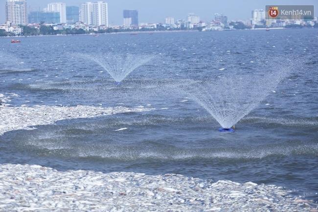 Ngày 3/10: Cá chết nổi ngày càng nhiều ở hồ Tây; đang tiếp tục bơm oxy, sục khí - Ảnh 1.