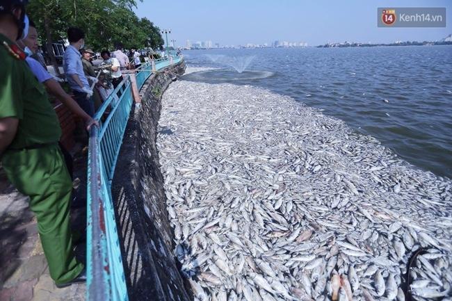 Ngày 3/10: Cá chết nổi ngày càng nhiều ở hồ Tây; đang tiếp tục bơm oxy, sục khí - Ảnh 3.