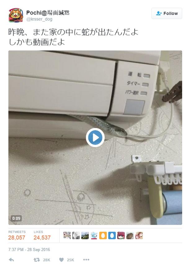 Nhật Bản: Người dân hoảng sợ khi nhìn thấy vị khách không mời lồm ngồm bò ra từ máy điều hòa - Ảnh 3.
