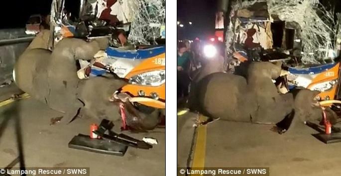 thai lan: xe bus dau dau voi song chuong, ket cuc bi tham hinh anh 1