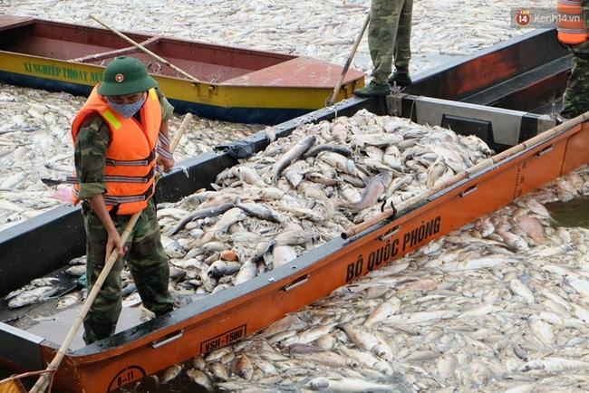 Gần 80 tấn cá chết ở hồ Tây được tiêu hủy như thế nào? - Ảnh 1.