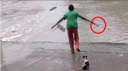 Người phụ nữ đuổi cá sấu bằng dép xỏ ngón.