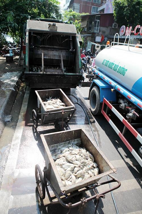 Cận cảnh tiêu hủy 200 tấn cá chết ở Hồ Tây - 3