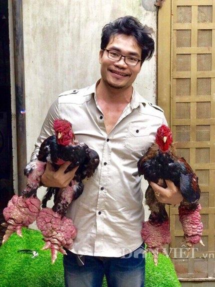 gà Đông Tảo, chân gà Đông Tảo to kỷ lục, gà đông tảo chân khủng, gà đông tảo chân to nhất, chân gà khủng