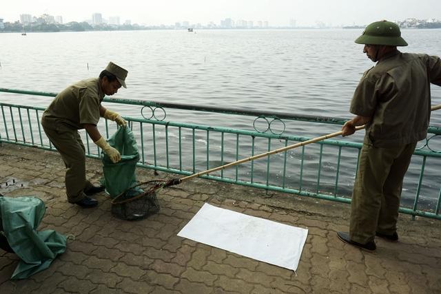 Rất nhiều lực lượng được huy động nhằm bảo vệ và khắc phục khẩn trương môi trường cho hồ Tây. Trong ảnh, lực lượng tự quản của phường Phú Thượng (quận Tây Hồ) tham gia làm sạch mặt nước.