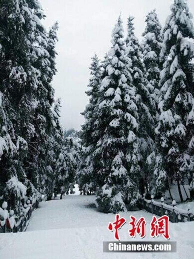 Trung Quốc: Những trận tuyết đầu mùa đẹp đến nao lòng - Ảnh 8.