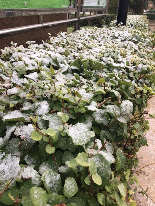 Trung Quốc: Những trận tuyết đầu mùa đẹp đến nao lòng - Ảnh 22.