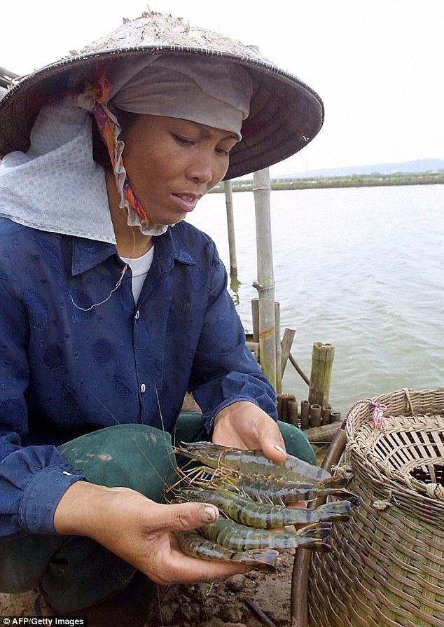 Video công nhân Việt Nam bơm thạch vào tôm bị vạch trần trên báo nước ngoài - Ảnh 2.