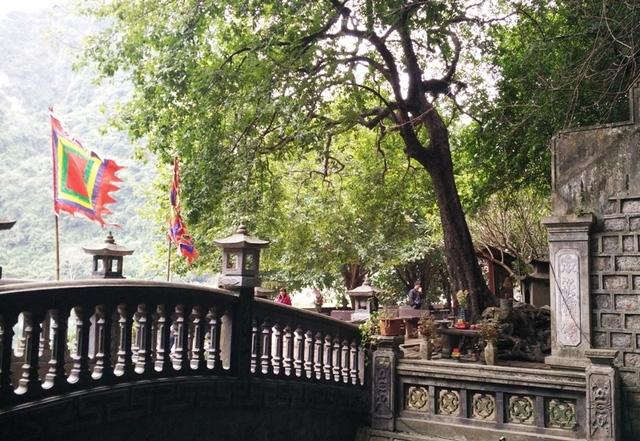 Theo truyền thuyết, 7 vị quan trung thần triều Đinh đã chết cùng nhau dưới một cây thị hơn 1.000 năm, cây thị này sau đó do già cỗi, bão táp bị gãy và chết. Ngay dưới gốc cây này mọc lên một cây thị con (cây thị hiện nay) đến nay cũng được khoảng 1.000 năm tuổi.