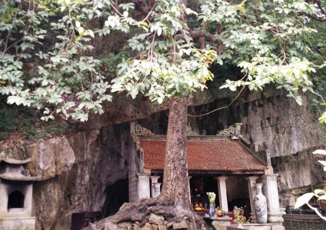 Dưới gốc cây có một đền thờ, vì gắn với lịch sử của triều Đinh nên cây thị rất linh thiêng, hàng năm được nhiều du khách đến tham quan, chiêm ngắm.