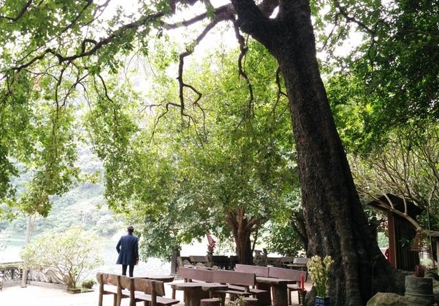 Du khách mỗi khi đến tham quan danh thắng Tràng An, Ninh Bình không thể qua qua cây thị độc đáo có 1 không 2 này ở Việt Nam