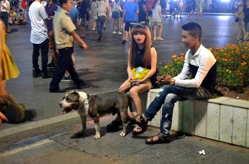 Nhiều con chó, có cả giống chó dữ, không được rọ mõm