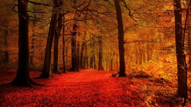 """Nhiệt độ có thể giảm và thời gian ban ngày ngắn hơn vào mùa thu, nhưng đổi lại bạn có cơ hội chiêm ngưỡng cảnh tượng thiên nhiên """"chuyển mình"""" ngoạn mục."""