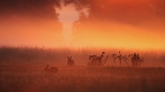 Nhiều loài động vật trong rừng đã chuẩn bị tích trữ năng lượng cho kỳ ngủ đông, nhưng loài thỏ vẫn sống bình thường suốt mùa đông kéo dài.