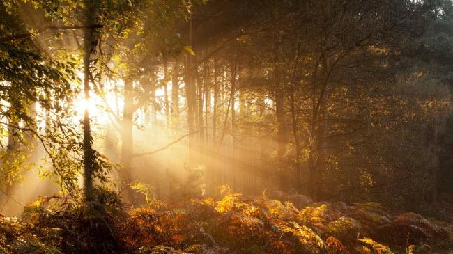 Những tia nắng ban mai xuyên qua tán lá cây đang chuyển sang sắc vàng và đỏ.
