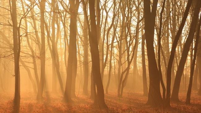 Nắng sớm chiếu xuống rừng cây rụnglá khi tiết trời dần chuyển từ mùa thu sang đông.