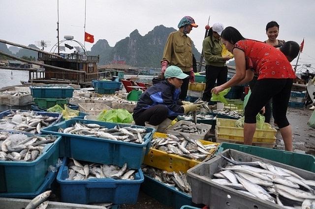 Thu nhập bị mất của người lao động làm thuê sẽ được chi trả chung với chủ tàu hoặc chủ cơ sở nuôi trồng thủy sản, sản xuất muối.