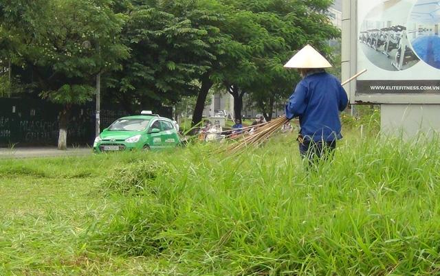 Cỏ mọc tốt um tùm trên đường Trần Duy Hưng được công nhân cắt bỏ