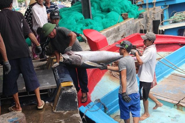 Ngư dân đưa cá ngừ đại dương Trường Sa lên cảng