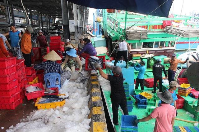 Hoạt động vận chuyển cá ở cảng Hòn Rớ (TP Nha Trang) nhộn nhịp