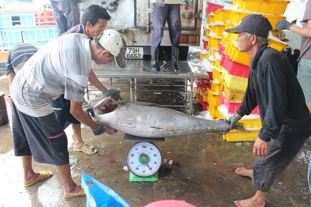 Mỗi con cá ngừ đại dương Trường Sa nặng gần nửa tạ