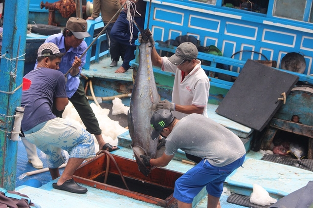 Cá ngừ đại dương được ngư dân đưa lên từ khoang