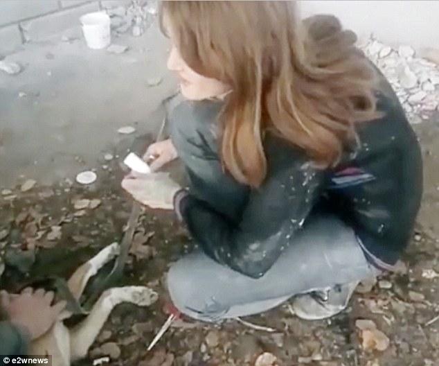 Giải cứu chó mắc kẹt trong hốc tường lạnh giá suốt 3 năm - 2