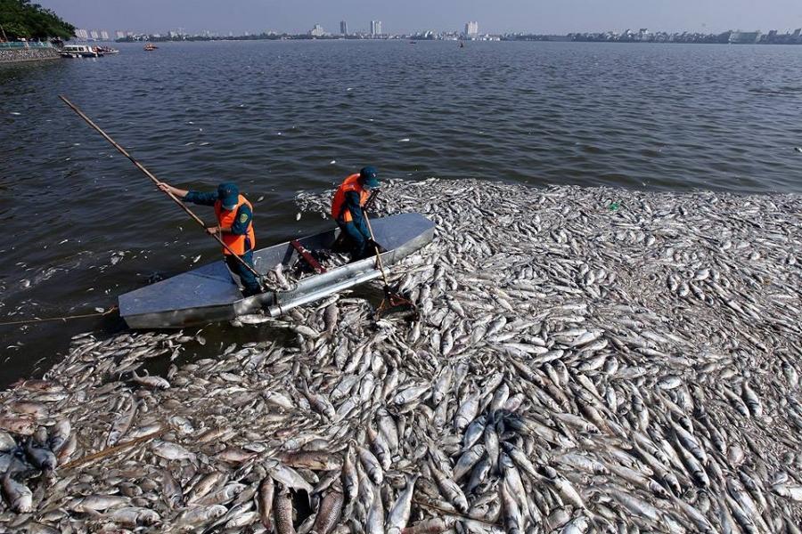 Hà Nội, cá chết Hồ Tây, xả thải, cá chết