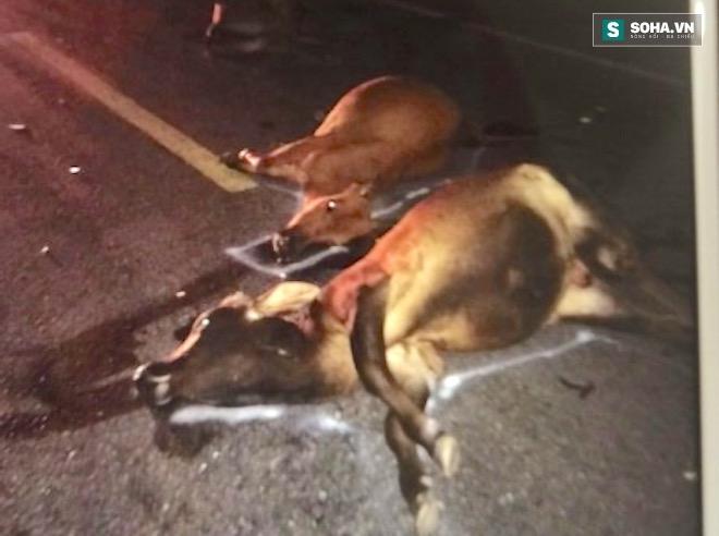 Tài xế bị dọa giết vì tông chết đàn bò - Ảnh 4.