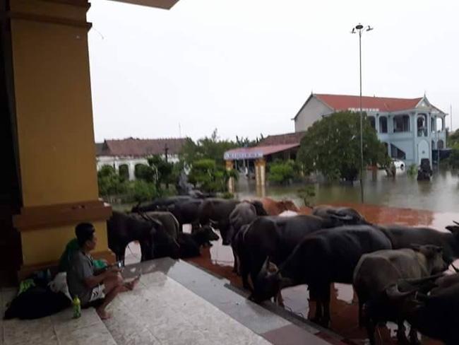 Chùm ảnh: Những hình ảnh nhói lòng về mưa lũ kinh hoàng ở miền Trung - Ảnh 14.