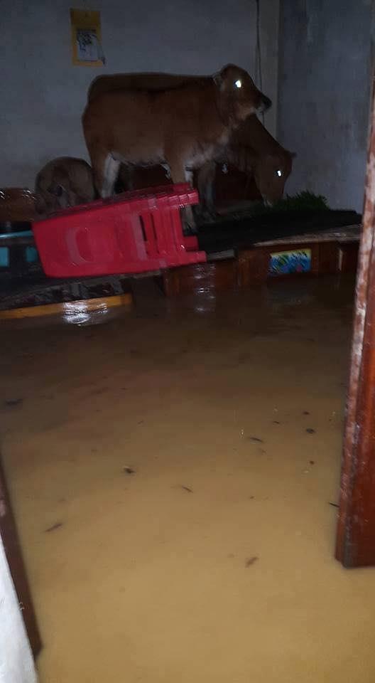 Chùm ảnh: Những hình ảnh nhói lòng về mưa lũ kinh hoàng ở miền Trung - Ảnh 15.