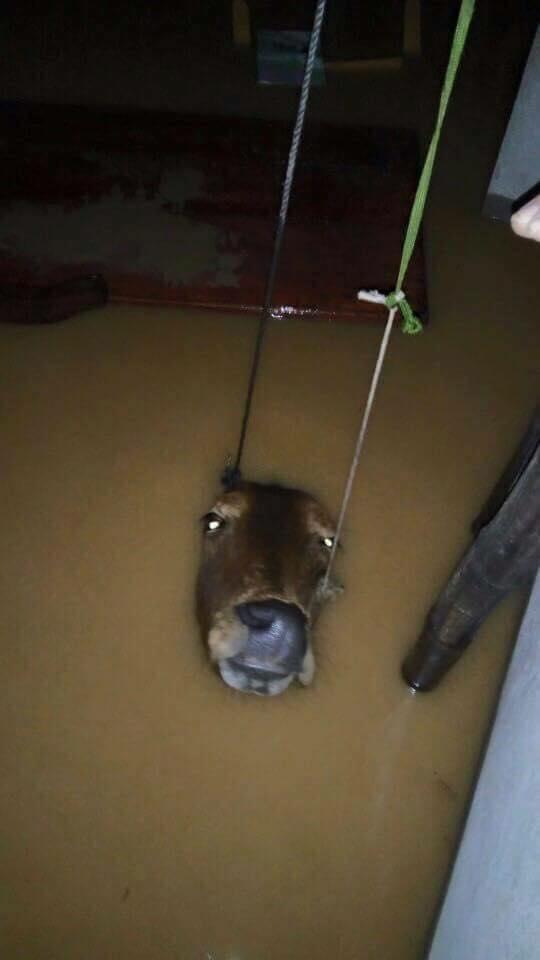 Chùm ảnh: Những hình ảnh nhói lòng về mưa lũ kinh hoàng ở miền Trung - Ảnh 16.