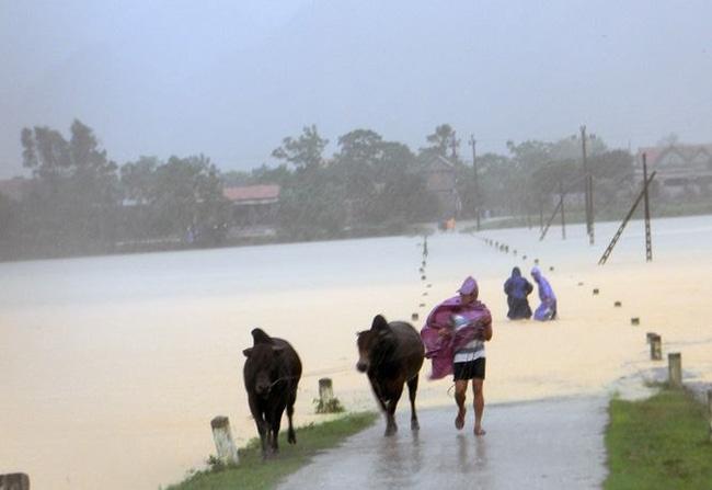 Chùm ảnh: Những hình ảnh nhói lòng về mưa lũ kinh hoàng ở miền Trung - Ảnh 20.
