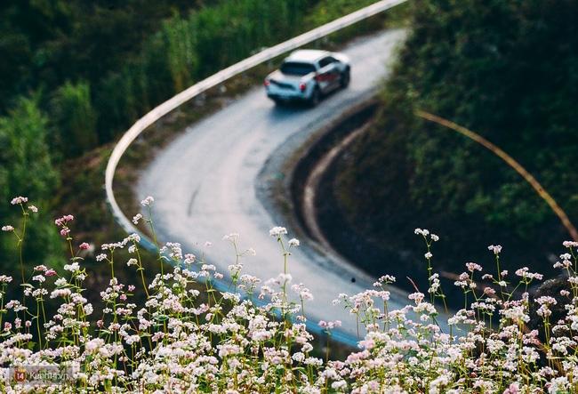 Ngắm mùa hoa tam giác mạch đẹp mê mải về ở Hà Giang - Ảnh 7.