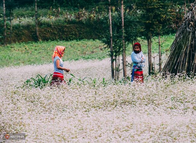 Ngắm mùa hoa tam giác mạch đẹp mê mải về ở Hà Giang - Ảnh 9.