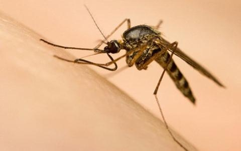 Image result for Phát hiện virus Zika trong muỗi vằn tự nhiên ở Nha Trang