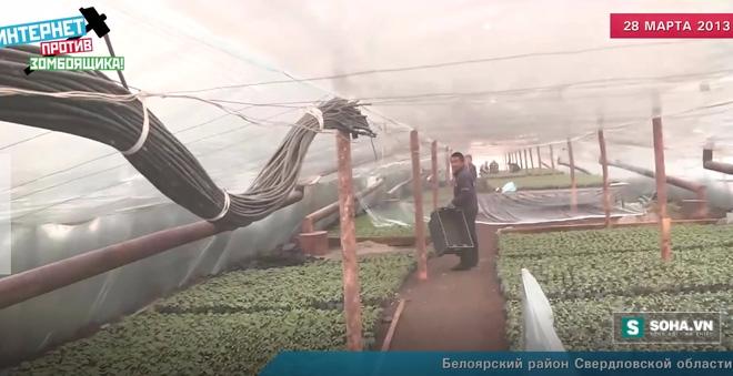 Chấn động: Rau quả Trung Quốc đầu độc hàng trăm trẻ em Nga - Ảnh 1.