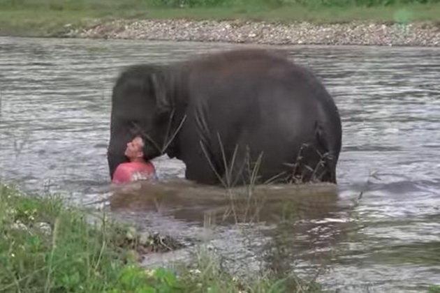 Tưởng người huấn luyện sắp chết đuối, voi lao xuống cứu